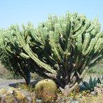 more cactus