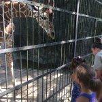 Baby Giraffe giving kisses