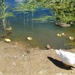 Little ducklings!