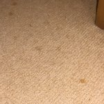 Tea stains on carpet room 447