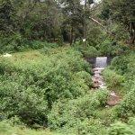 View of Munnar Tea Gardens