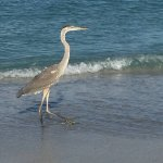 Bungalow Beach Resort-bild