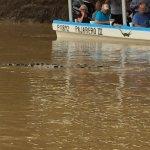 Lurking crocodiles near the Jungle cruise boats.