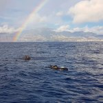 Photo of VMT Madeira - Catamaran Trips