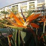 Photo of Pestana Promenade