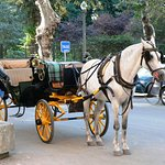 Horse Drawn Carriages available from Plaza Espana that is just minutes away from the Hotel!