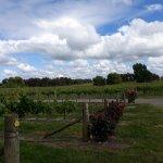 Clearview vineyard
