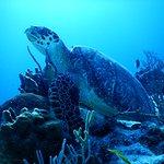 Santa Rosa reef