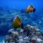 La Francesa reef