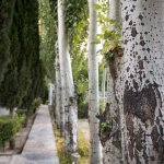 Trees in hotel grounds