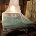 Bed net to keep bugs off