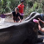 Our visitors care the elephant
