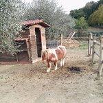 Foto de Agriturismo La Pietriccia