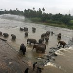 Herd of Elephant bathing in the river