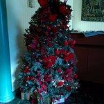 Beautiful Christmas trees!