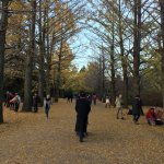 Photo of Showa Kinen Park