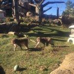 Lincoln Park Zoo Foto