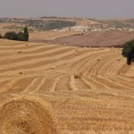 Agriturismo Bonellino Vecchio Foto