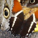 ภาพถ่ายของ Mariposas de Mindo - Butterfly Garden