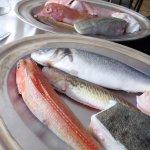 Les poissons de la bouillabaisse et de la bourride
