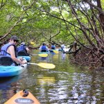 Floating through the beautiful mangrove tunnels on a kayak tour.