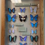 In the butterfly room