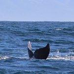 Foto di Bella Monterey Bay