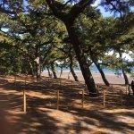 ภาพถ่ายของ Miho Seacoast (Miho no Matsubara Beach)