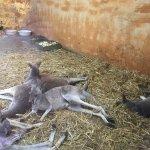 Foto de Olomouc Zoo