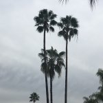 Pretty palm trees at the pool