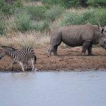 Rhino sharing his space