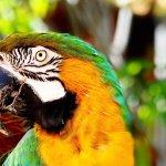 Zdjęcie Four Seasons Resort Lanai