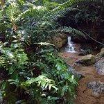 stream beside the path