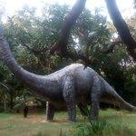dinosour park