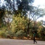 greenary in park