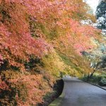 Photo de Mt. Shiroyama