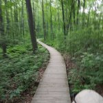 The boardwalk through the woods