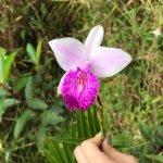 Bild från Chachagua Rainforest Eco Lodge