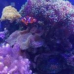 One of many aquaria