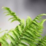 lots of ferns along the walk