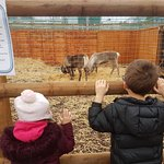 The Reindeers at Planters were fab! Also various pets to look at kept my youngest occupied!