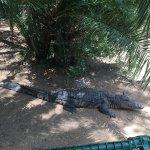Crocs in the garden
