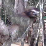Фотография Tortuguero Wildlife Tour