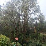 Billede af Paraiso Quetzal Lodge