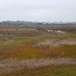 Ballona Wetlands