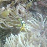 桑丁岸島潜水度假村照片