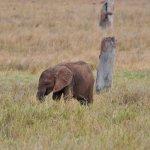 Foto de Rhino Safari Camp