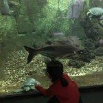 Photo de Aquarium Tropical de la Porte Doree