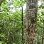 Bild från Kinsakubaru Forest