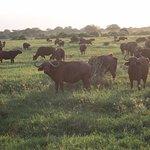 Photo de Robert Safaris Adventure Day Excusions